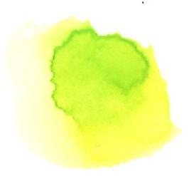 kimidori